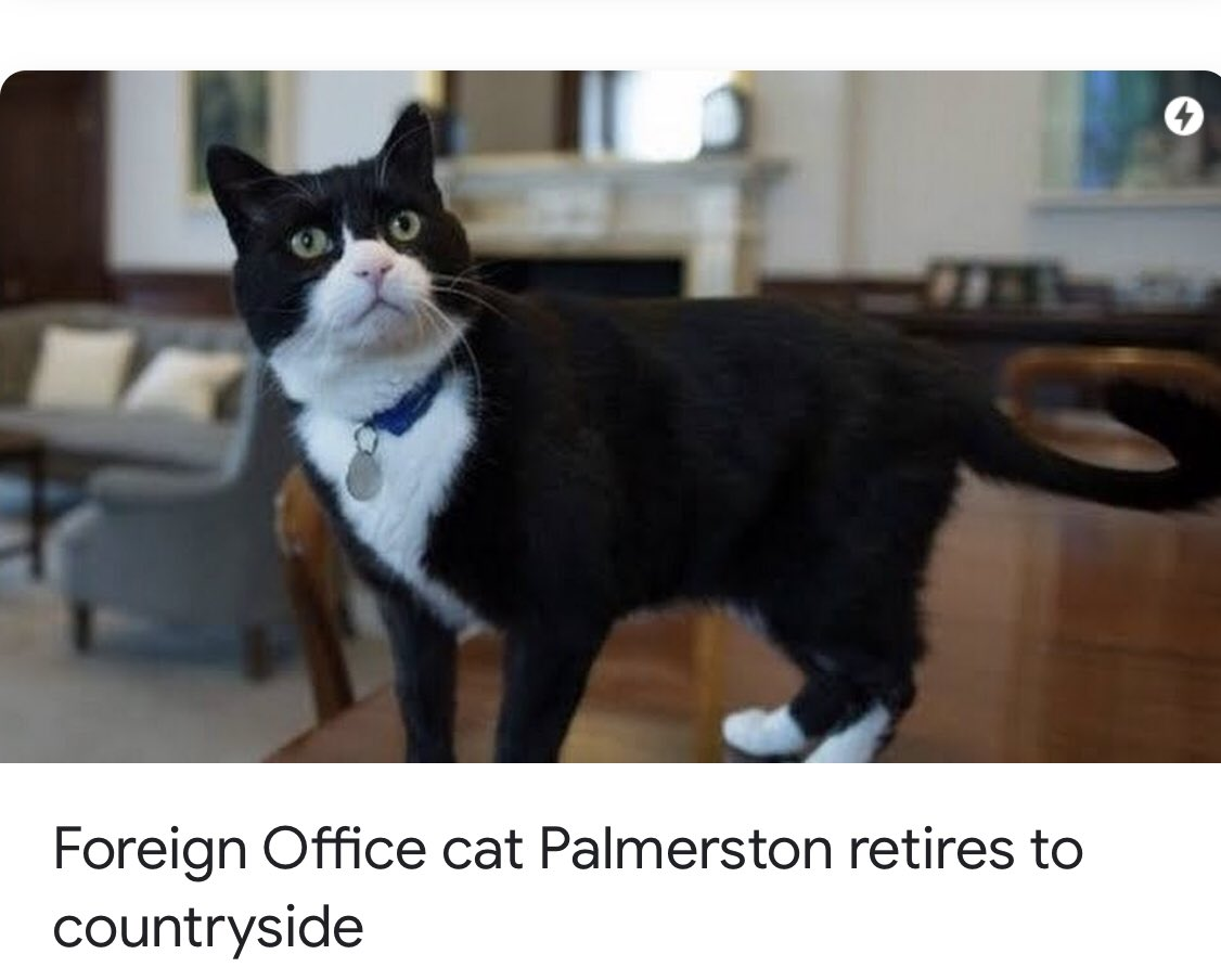 Lord Palmerston, the chief mouse-catcher cat of United Kingdom Foreign Office, retires after Purr-fect years of service