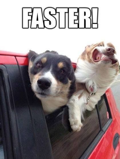 funny dogs memes unkleaboki