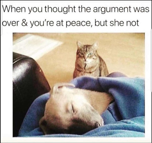 Funny Cat and Dog Memes 2020 (11 Photos)