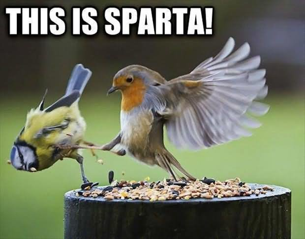 this is sparta funny bird meme image1387310626636015573