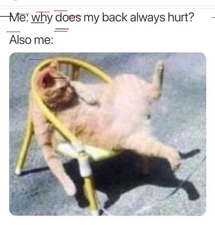 Top 10 Funny Animal Memes for Friday, 18th September, 2020