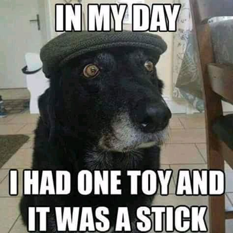 Unkleaboki Funny Morning Pictures: 12 Tuesday thought, Inspirational quotes, Funny Cat and Dog memes