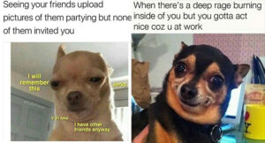 Funny Chihuahua Memes : Funny Friday Memes 2020 Unkleaboki