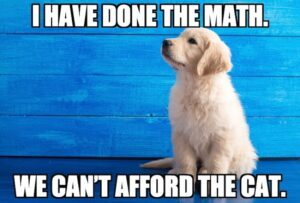 12 Funny Golden Retriever Memes, Funny Dog Video