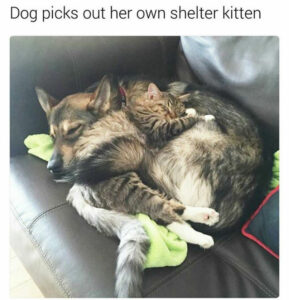Adorable Dog Memes and Funny Cat Pictures That Will Make Your Day (Thursday morning funny memes). 15 Funny Animal Photos