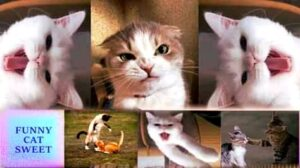 Funny cat memes 2020 (15 Amazing Cat Pictures)