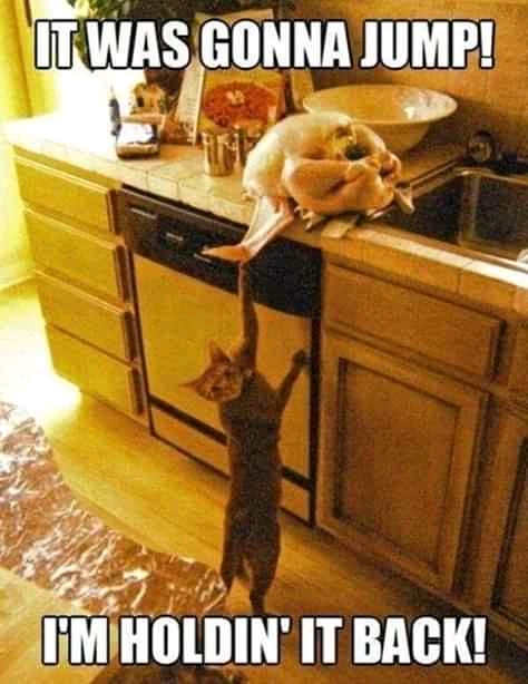Funny Cat Memes 2020: Thanksgiving memes and Black Friday pictures