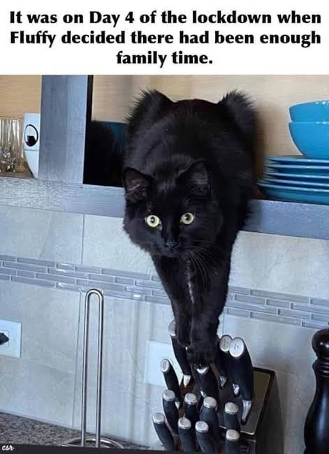 Funny cat memes 2020, Funny Dog memes 2020, Funny Animal Pictures, Thanksgiving memes and Random Funny Pictures