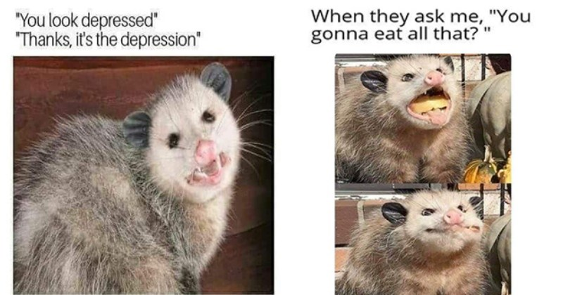 its the depression and one of a possum stuffing its face when they ask me you gonna eat all that