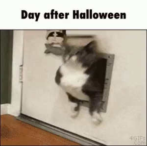 funny day after halloween memes ( Funny Memes)