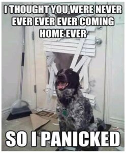 Funny Dog Pictures (52 Funny Dog Memes 2020)