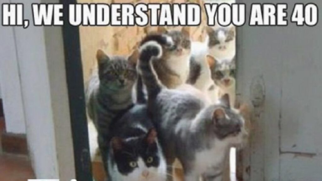 25 Funny Cat Memes To Make You Laugh CatTime 2 1280x720 1