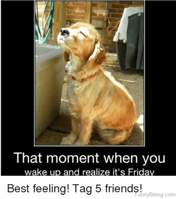 25 That Moment When You Wake Up Friday meme