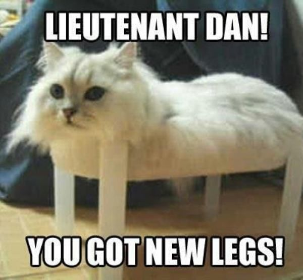 42 Silly Cat Memes