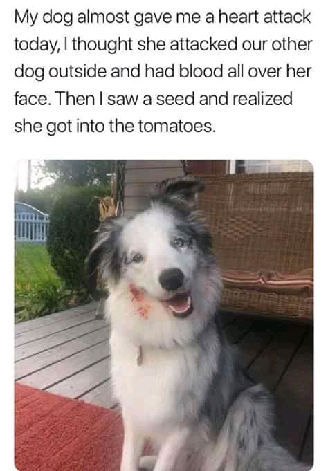 Funny Dog Memes 2021, Adorable Dog Pictures of the Day, Amazing Dog Pictures Dogstagram, Dog memes that are actually funny, Funny Dog memes we can relate with.