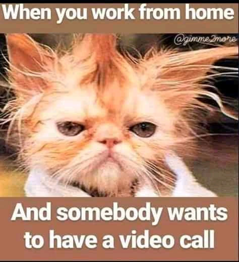Purrfect Funny Cat Pictures, Funny Cat Memes 2021, Amazing Cat Pictures -catstagram, funny cat memes we can relate with, adorable cat pet animal pictures of the day