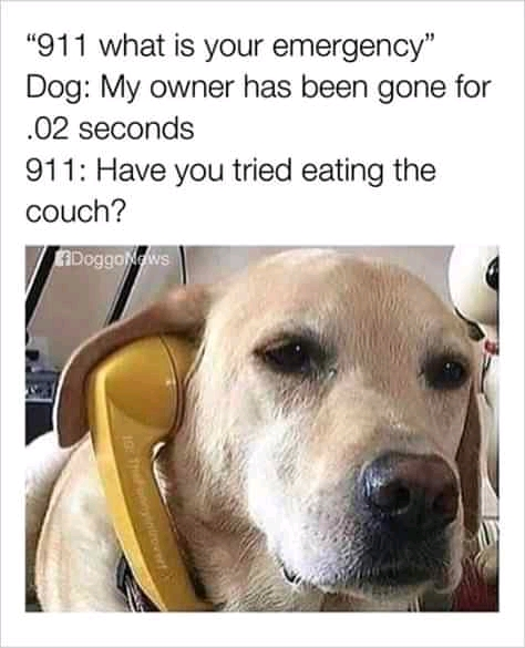 Funny Dog Memes 2020, Funny Dog Pictures 2021, Funny Capitol, Funny Vaccine Pictures, Funny Animals.
