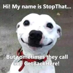 35 Funny Dog Memes, Funny Dogs, Funny Dog pictures, Funny Dog, Funny Animals.