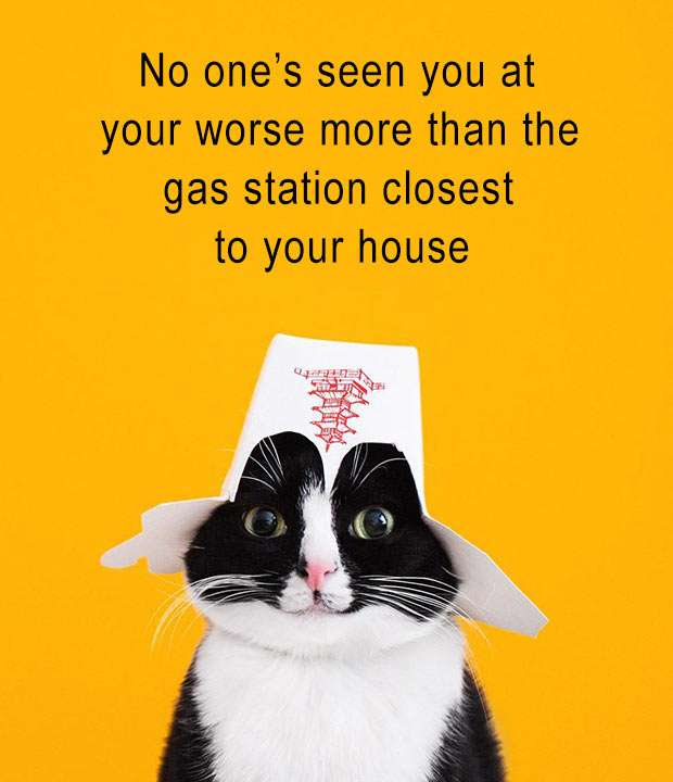 funny memes looking worse gas station funny cats