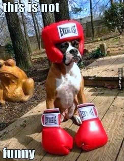 15 Funny Dogs Rumble, Funny Dogs on Rumble (Funny Pictures, Videos)