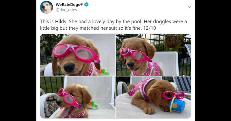 pool her doggles were little big but they matched her suit so s fine 1210 adorable puppy in goggles 1