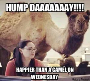 Happy Hump day funny (41 Wednesday funny pictures)