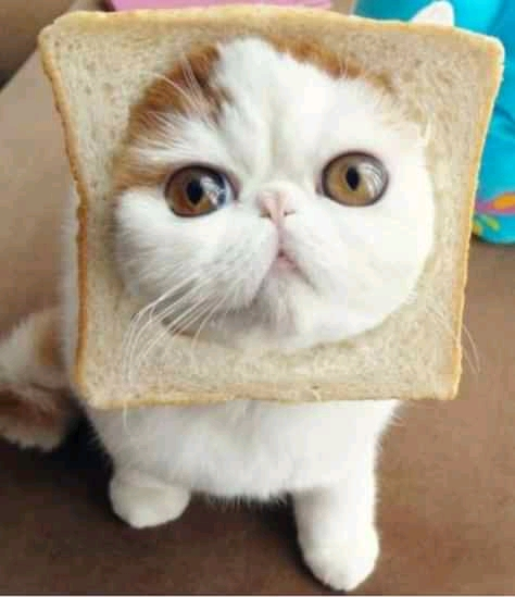 Read more about the article 53 Funny cat pictures