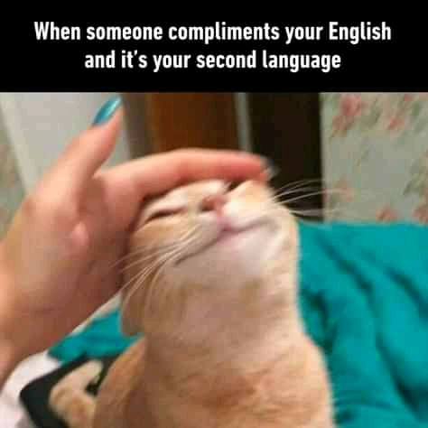 Funny cat memes that will never fail to make us lol