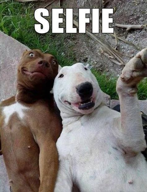 Read more about the article 8 Funny Animal Pictures (and Funny Animal videos!)