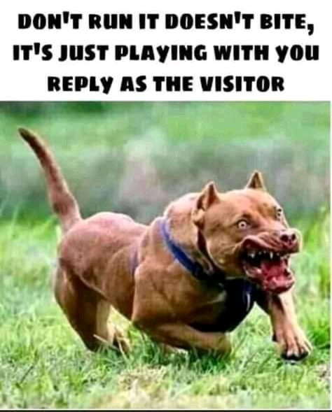 Read more about the article Funny Dog Memes (31 funny random memes)