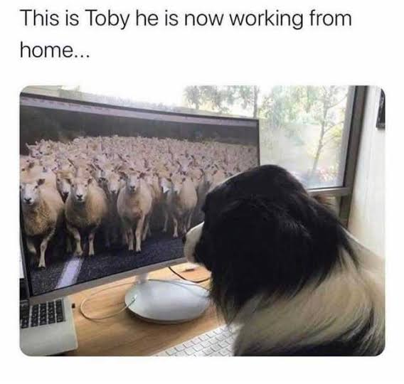 Read more about the article Top Dog Memes of 9 July 2021